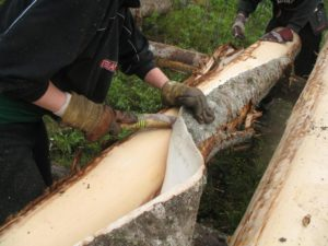 fine leather goods_The spruce bark is harvested befor midsumme as the sap enters the tree_Böle tannery
